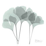 Ginkgo in Pale Blue