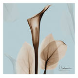 Calla Lilly Sienna on Blue