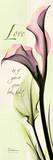 Love  Pink Calla Lily