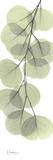 Eucalyptus in Green III