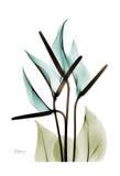 Blue Anthurium Bouquet