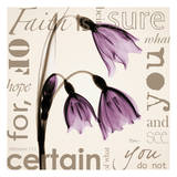 Faith  Violet Tulips