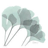 Ginkgo in Pale Blue II