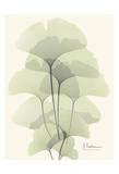 Ginkgo Leaves in Green II