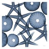 Collage of Starfish and Sea Urchins Reproduction d'art par Albert Koetsier