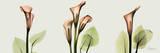 Spring Calla Lily Triple