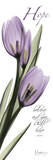 Tulips in Purple  Hope