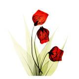 Sandersonia in Red