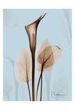 Calla Lily Brown on Blue II