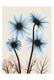 Blue Gerbera Bouquet