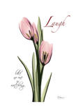 Tulip in Pink  Laugh