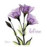 Gentian Believe