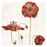 Poppies Trio