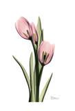 Annie Tulip