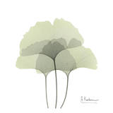 Ginkgo Trio in Green