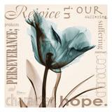 Rejoice  Blue Tulip