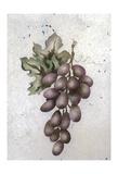 Glorious Grapes II