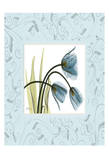 Tulips With Blue Damask Frame
