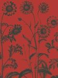 Chrysanthemum  no 9