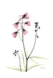Pink Spring Snowdrop