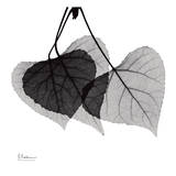 Three Leaves Three