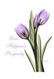 Purple Tulips Love Happiness