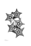 Star Fish Group in Black and White