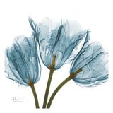 Tulips in Blue Reproduction d'art par Albert Koetsier