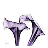 Violet Calla Twins
