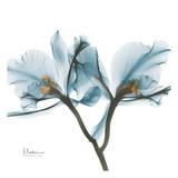 Orchids in Blue Reproduction d'art par Albert Koetsier