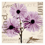 Love  Violet Chrysanthemum