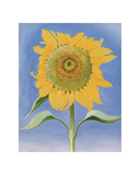 Sunflower  New Mexico  c1935