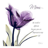 Mom  Purple Tulip