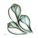 Sea Shells in Green II Reproduction d'art par Albert Koetsier
