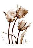 Tulip Arrangement in Brown