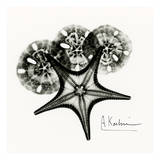 Starfish in Black and White