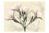 Oleander in Pink on Beige