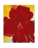 Red Amaryllis, c.1937 Reproduction d'art par Georgia O'Keeffe