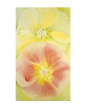 Pink and Yellow Hollyhocks, c.1952 Reproduction d'art par Georgia O'Keeffe