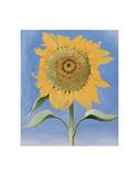 Sunflower, New Mexico, c.1935 Reproduction d'art par Georgia O'Keeffe