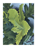 Green Oak Leaves  c1923