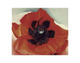 Poppy  c1927
