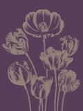 Tulip  no 13