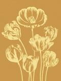 Tulip  no 20