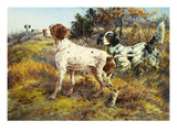 A German-Short Haired Pointer and Two Setters in a Landscape