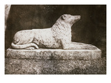 Effigy of Sir Walter Scott's Favourite Dog  Maida