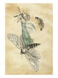 A Fairy Standing on a Moth While Being Chased by a Butterfly