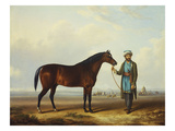 An Arab Stallion Held by a Groom with an Encampment Beyond