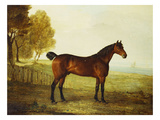 The Chestnut Hunter 'Berry Brown' in a Field by an Estuary  with Sailing Ships in the Distance