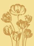 Tulip  no 19
